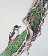 Paul Parsons - Great spotted woodpecker