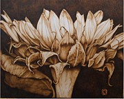 Flower Still Life Pyrography Framed Prints - Great Sunflower no color Framed Print by Cynthia Adams