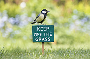 Quirky Art - Great Tit on a Keep Off The Grass Sign by Tim Gainey