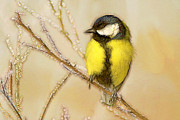 Isolated On Black Background Digital Art - Great Tit Perching On A Branch by Odon Czintos