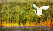 Great Outdoors Paintings - Great white egret in flight over wetland pond  by Odon Czintos