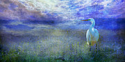 Deborah Mix - Great White heron
