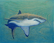 Sharks Painting Framed Prints - Great White Framed Print by Nathan Ledyard
