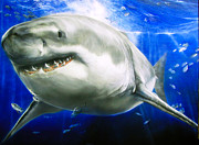 Sharks Paintings - Great White Shark by Ted Hayward