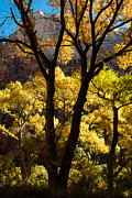 Photos Of Autumn Prints - Great White Throne in the Fall Zion National Park Utah Print by Robert Ford
