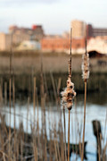Salt Marsh Photos - Greater Wilmington  by JC Findley