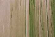 Randall Esulto - Green Abstract Background
