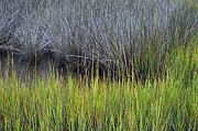 Beach Photographs Art - Green and Gray Marsh Grasses on Jekyll Island by Bruce Gourley