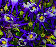 Abstract Columbine Prints - Green and Purple Burst Abstract Print by James Hammen