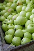 Green Posters - Green Apples Poster by Rebecca Cozart