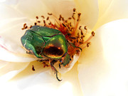 Snezana Petrovic - Green beetle