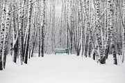 Snowscape Prints - Green Bench Print by Alexander Senin