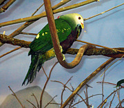 Spectacular Pyrography Prints - Green Bird Print by Larry Stolle