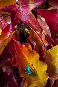Autumn Leaf Prints - Green bug Print by Garry Gay