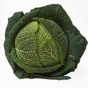Food And Drink Metal Prints - Green cabbage Metal Print by Bernard Jaubert