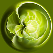 Digital Manipulation Posters - Green Cabbage Orb Poster by Anne Gilbert