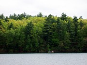 Walden Pond Framed Prints - Green Framed Print by Catherine Gagne