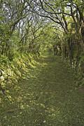 Jane McIlroy - Green Country Lane