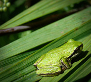 Tiny Tree Frog Prints - Green Day Print by Ronda Broatch