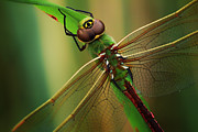 Dragon Fly Posters - Green Dragon Poster by Todd Bielby