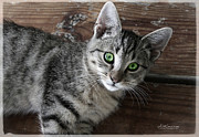 Kitten Prints Posters - Green Eyes-Tabby Kitten Poster by Darlene Konieczny