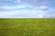 Field Photographs Posters - Green Field Blue Sky Poster by Natalie Kinnear