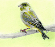 George Horsey - Green Finch