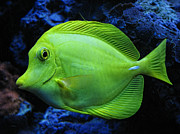 Sea Green Posters - Green Fish Poster by Wendy J St Christopher