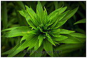 CSH Photography - Green Flower