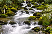 Hunter Green Prints - Green Flowing Stream Print by Robert Harmon