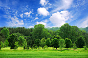 Blue Sky Art - Green forest by Elena Elisseeva