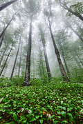 Balkan Mountains Photos - Green Giants by Evgeni Dinev