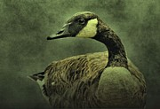 Canadian Geese Mixed Media - Green Goose by Dan Sproul