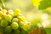 Grape Vine Photo Originals - Green Grapes In Sunset Light by Christophe ROLLAND