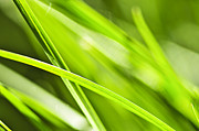 Droplets Posters - Green grass abstract Poster by Elena Elisseeva