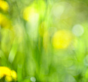 Bokeh Photo Posters - Green grass with yellow flowers abstract Poster by Elena Elisseeva