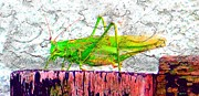 Nag Paintings - Green Grasshopper by Daniel Janda