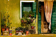 House Plants Framed Prints - Green House Burano Italy Framed Print by Xavier Cardell