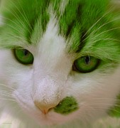 Companion Digital Art - Green Kitten by Anita Lewis