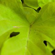 Matt Dobson - Green Leaf