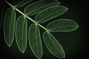 David Longstreath Metal Prints - Green Leaves 1 Metal Print by David Longstreath