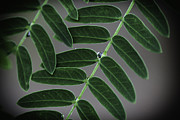 David Longstreath Metal Prints - Green Leaves 2 Metal Print by David Longstreath
