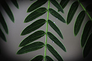 David Longstreath Metal Prints - Green Leaves 4 Metal Print by David Longstreath