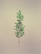 Green Leaves Print by John Krakora