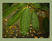 Ron Roberts Photography Greeting Cards Prints - Green Leaves Print by Ron Roberts