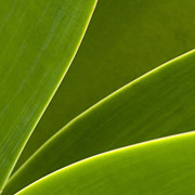 My Sold Prints - Green Leaves Series  2 by Heiko Koehrer-Wagner