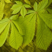 Green Leaves Series Print by Heiko Koehrer-Wagner