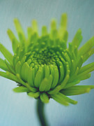 Fine Art Flower Photography Posters - Green Light Poster by Irina Wardas