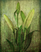 Digital Pyrography - Green Lilies by Linda Veit