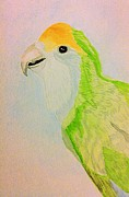 Mellany  Kettering - Green love bird